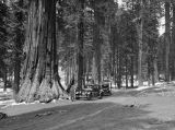 California, automobiles drive on road near Redwood trees