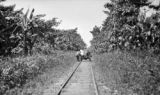 Costa Rica, men on handcar with banana and cacao nearby in Limón Province