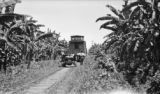 Costa Rica, handcar and train near banana plants in Limón Province