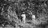 Mexico, boys posing next to young mahogany tree at Jesús Carranza