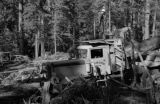 Canada, lumberjacks working in forest on Vancouver Island