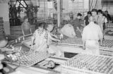 Canada, people working in fish processing plant in Vancouver