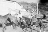 Canada, woman riding horse at stable in Calgary