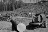 Canada, lumberjacks working on Vancouver Island