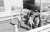 Canada, farmers with cattle in pen at farm