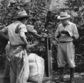 Guatemala, men weighing sacks of coffee beans