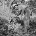 Guatemala, man gathering wood in forest