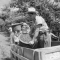 Costa Rica, coffee plantation workers loading beans onto cart