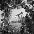 United States, pump jack on oil field in Bakersfield