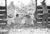 Guatemala, workers sitting on banana leaves in freight car at Maya Farm near Quiriguá