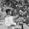 Mexico, boy harvesting fruit at orchard in Tepoztlán
