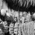 Guatemala, men preparing bananas for railroad export