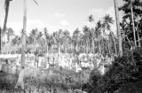 Guam, view of cemetery surrounded by palm trees