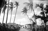 Guam, view of village through palm trees