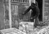 Chongqing (China), a man plastering the exterior wall of a building