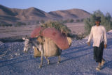 Esfahan province (Iran), man directing donkey on road