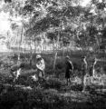 Rayong Changwat (Thailand), men standing by rubber plants
