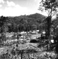 Yala province (Thailand), forest cleared for farming