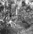 Central region (Thailand), scientists in the forest