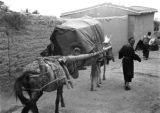China, man leads donkeys carrying a sedan chair