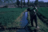 Esfahan province (Iran), man tending irrigation ditch