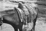 Shaanxi province (China), close-up of horse saddle