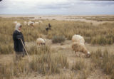 Syria, shepherd boy with his herd of sheep and goats