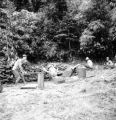 Bataan province (Philippines), men sawing and splitting apitong trees for firewood