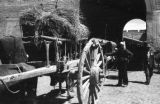 China, men standing near wagons with hay