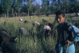 Esfahan province (Iran), shepherd in field with herd