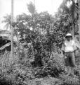 Thonburi (Thailand), man in fruit garden