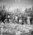 Chon Buri Changwat (Thailand), men posing in front of cane fields