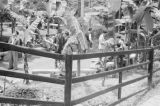 China, people standing in fenced garden with palm trees