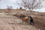 Malula (Syria), man and a donkey