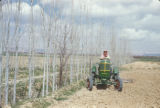 Syria, farmer plowing a field