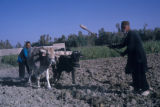 Esfahan province (Iran), two men plowing with oxen