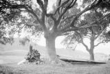 Hong Kong (China), propeller and wing of downed Japanese airplane under tree