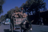 Esfahan province (Iran), two men driving donkey cart carrying logs
