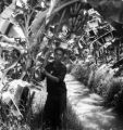 Nonthaburi Changwat (Thailand), man propping up plants