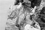 Lanzhou (China), close-up of woman using rock to wash clothes