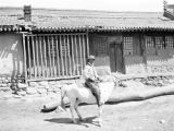 Shanxi province (China), portrait of Mr. Huang Chen-hua on horseback