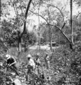 Changwat Chiang Mai (Thailand), group of men examine forest