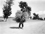 Iran, man carrying large bundle of harvested grain on his back