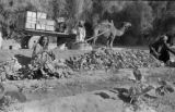 Pakistan, camel-drawn cart at pile of turnips near ditch