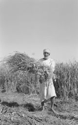 Pakistan, man with fodder oats smiling in oat field in Lahore