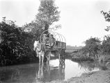 Golestān province (Iran), men in horse-drawn carriage traversing stream on way to village