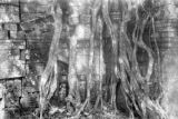 Cambodia, tree roots growing on ruins of Ta Prohm Temple in Angkor