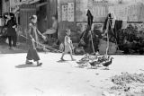 Hong Kong, woman and boy herding ducks through village of Sha Tau Kok
