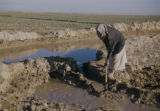 Baquba (Iraq), man removing earth dam to fill irrigation ditch