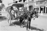 Pakistan, horse-drawn carriage on street in Peshāwar